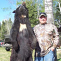 Big Manitoba black bear with chest blaze