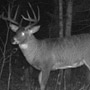 Trail Camera Picture of Manitoba Crown Land Buck